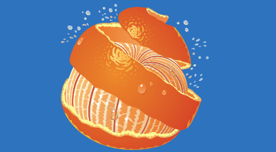 Jaffa_Fruit_Illustrations