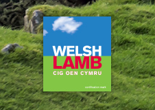 Welsh_Lamb_Promotional