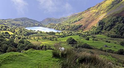 Welsh_Lamb_Snowdonia_Prize